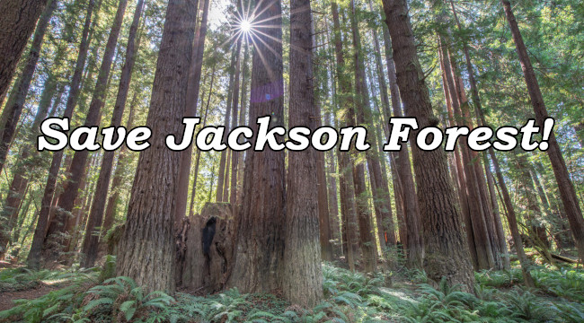 Save Jackson Forest Publicly owned redwoods' highest value is in preservation