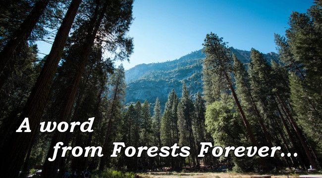A word from Forests Forever...