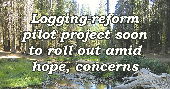 Logging-reform pilot project soon to roll out amid hope, concerns