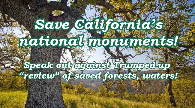 Save California's national monuments! Speak out against Trumped-up �review� of saved forests, waters!