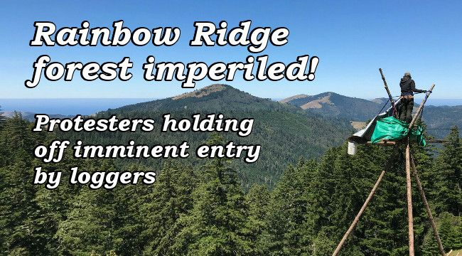 Rainbow Ridge forest imperiled. Protesters holding off imminent entry by loggers