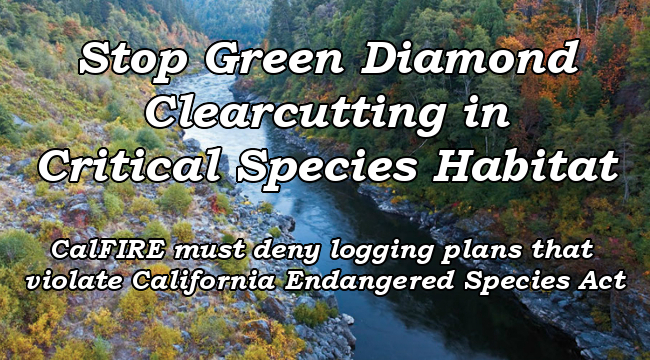 Stop Green Diamond Clearcutting in Critical Species Habitat. CalFIRE must deny logging plans that violate California Endangered Species Act.