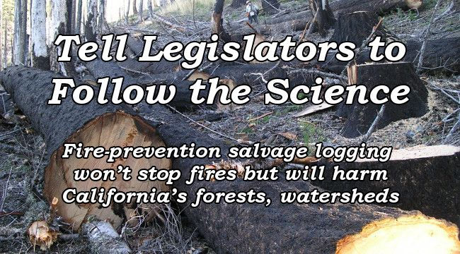 Tell Legislators to Follow the Science.  Fire-prevention salvage logging won't stop fires but will harm California's forests, watersheds
