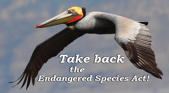 Take back Endangered Species Act