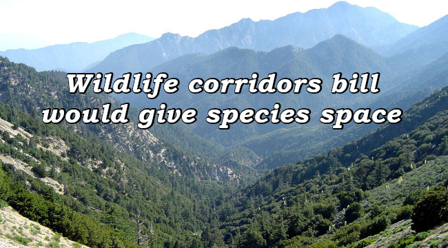 Wildlife corridors bill would give species space