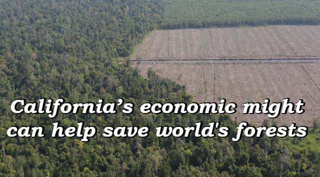 California's economic might can help save world's forests