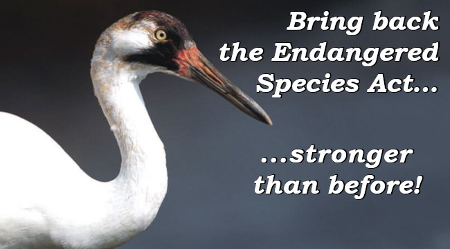 Bring back the Endangered Species Act... stronger than before!