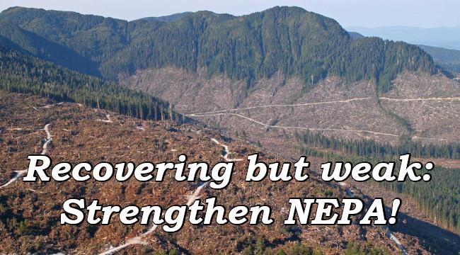 Recovering but weak: Strengthen NEPA!