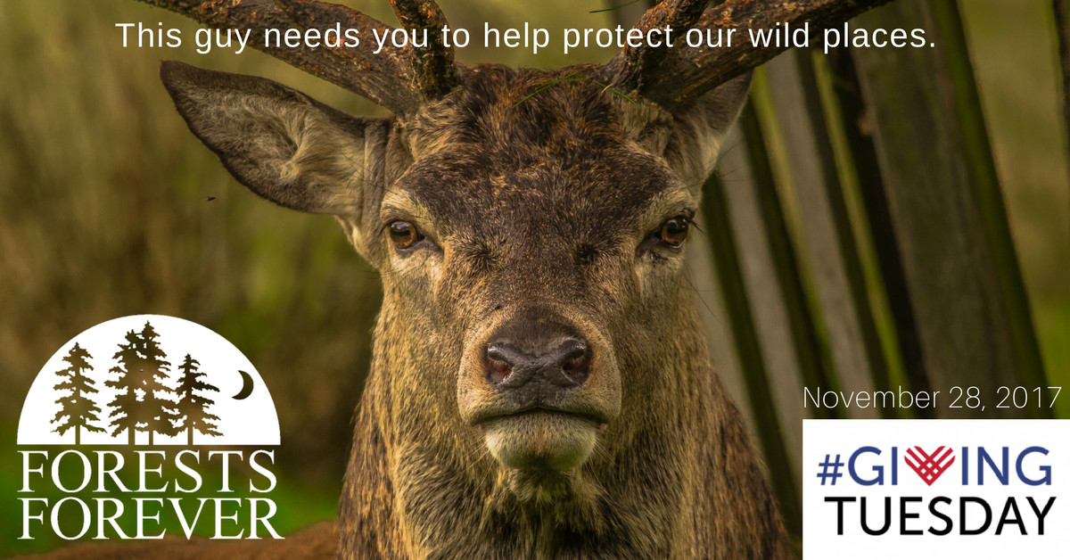 This handsome elk is one of the many creatures who depend on California's forests.  Please help us protect the wildlife habitat of California with a contribution on #GivingTuesday Nov. 28, 2017.