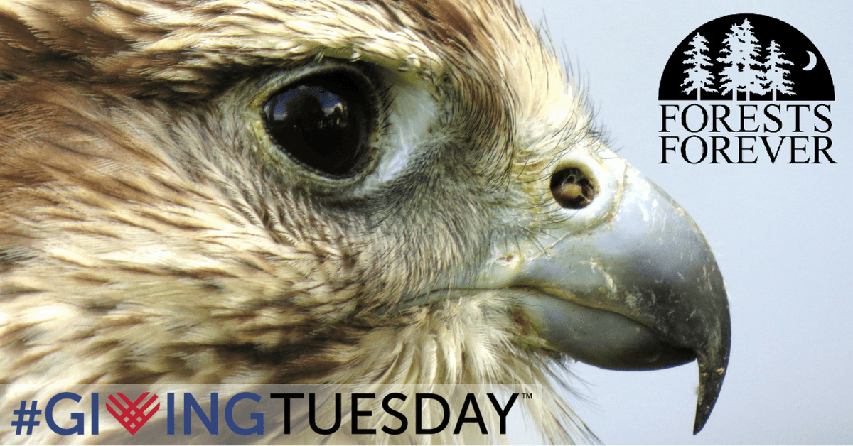 Its not too late to make your #GivingTuesday contribution