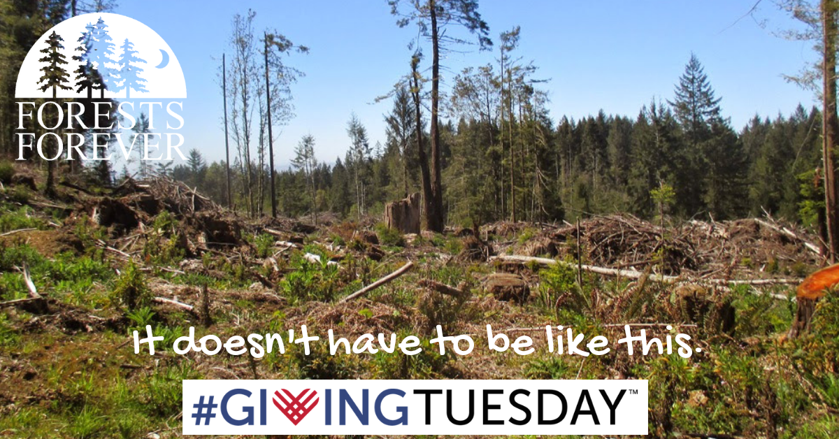 Stop the destruction of our Forests - Please Save the Date, Giving Tuesday Nov. 27, 2018