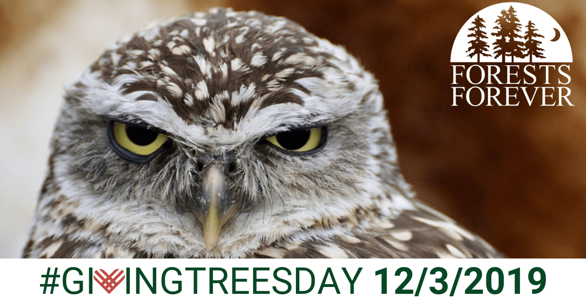 Giving Treesday 12/3/2019