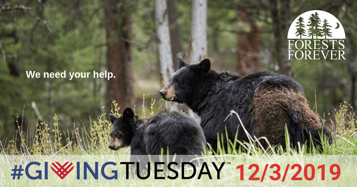 We need yoru help. #GivingTuesday 12/3/2019