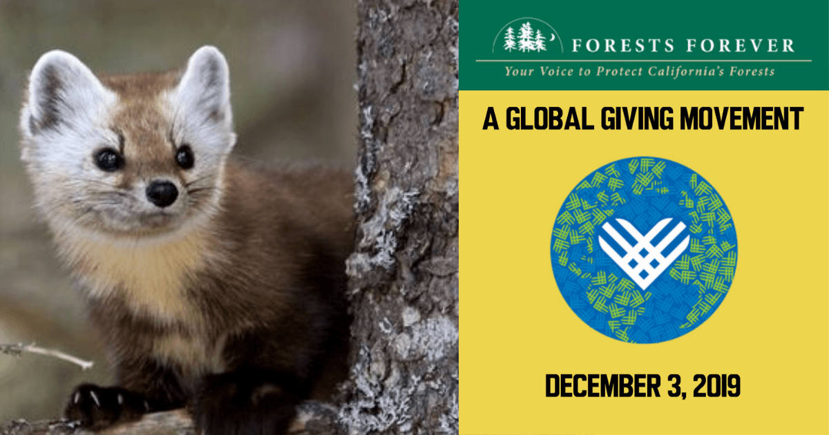 A GLOBAL GIVING MOVEMENT DECEMBER 3, 2019