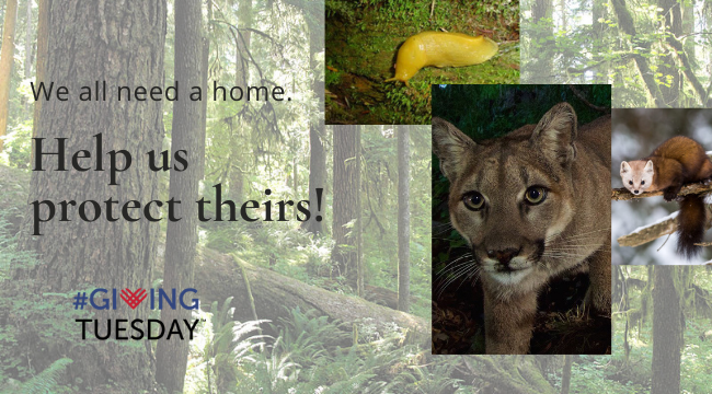 We all need a home. Help us protect theirs...