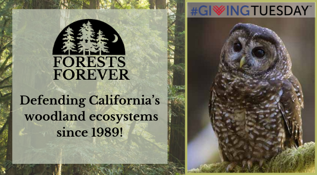 Tomorrow is Giving Tuesday and California's forests need your support.