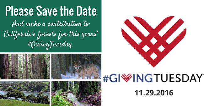 Please Save the Date - And make a contribution to California's forests for this years' #GivingTuesday!