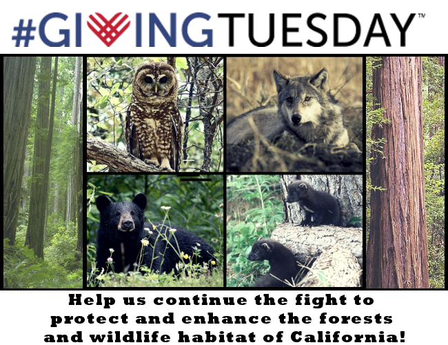 #GivingTuesday - Help us continue the fight to protect and enhance the forests and wildlife habitat of California!