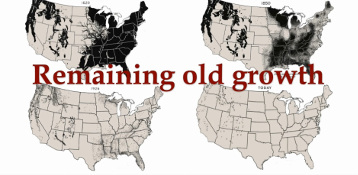 2014 Map of remaing old growth in the US