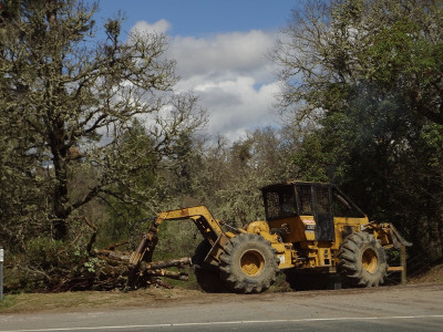 Bulldozer hauling away destroyed oaks by Hwy 101 in Mendocino County, CA