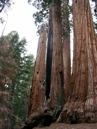 Giant Sequoia National Monument, California